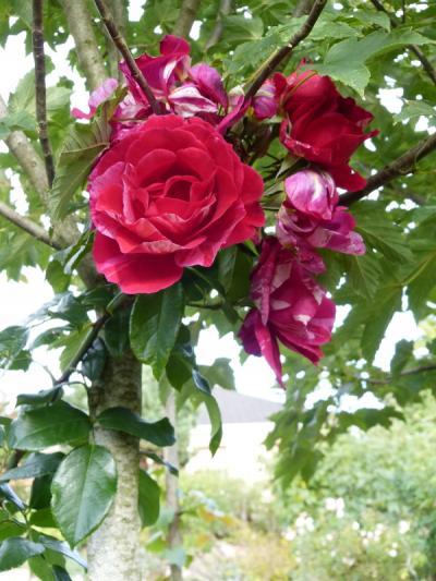 jardin des `MAL`AKHIM  - Page 6 Lysiane:visite_du_jardin:2015:p1200862