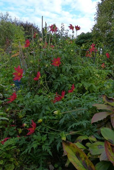 jardin des `MAL`AKHIM  - Page 6 Lysiane:visite_du_jardin:2015:p1200864