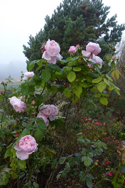 jardin des `MAL`AKHIM  - Page 6 Lysiane:visite_du_jardin:2015:p1210288