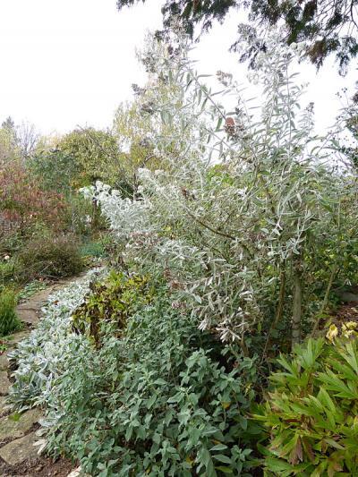 jardin des `MAL`AKHIM  - Page 6 Lysiane:visite_du_jardin:2015:p1210312