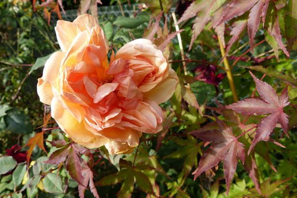 jardin des `MAL`AKHIM  - Page 6 Lysiane:visite_du_jardin:2015:p1210316