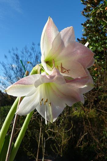 jardin des `MAL`AKHIM  - Page 6 Lysiane:visite_du_jardin:2015:p1210400