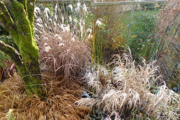 jardin des `MAL`AKHIM  - Page 6 Lysiane:visite_du_jardin:2015:p1210428