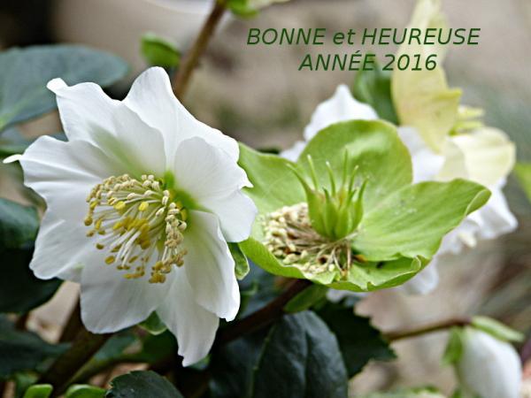 jardin des `MAL`AKHIM  - Page 6 Lysiane:visite_du_jardin:2016:p1210502a
