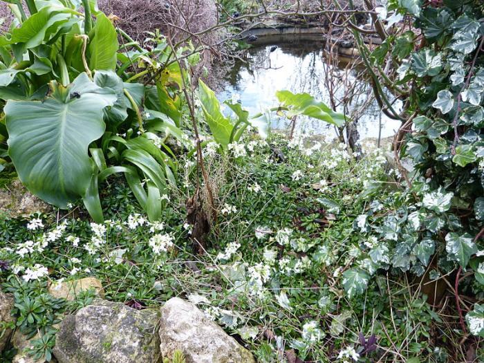 jardin des `MAL`AKHIM  - Page 7 Lysiane:visite_du_jardin:2016:p1210535