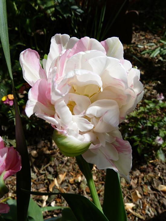 jardin des `MAL`AKHIM  - Page 7 Lysiane:visite_du_jardin:2016:p1210905