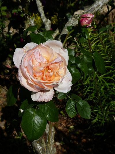jardin des `MAL`AKHIM  - Page 7 Lysiane:visite_du_jardin:2016:p1220326