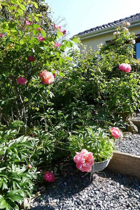 jardin des `MAL`AKHIM  - Page 7 Lysiane:visite_du_jardin:2016:p1220350