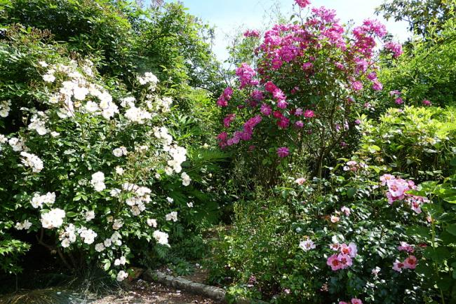 jardin des `MAL`AKHIM  - Page 7 Lysiane:visite_du_jardin:2016:p1220557