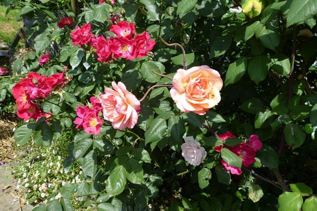 jardin des `MAL`AKHIM  - Page 7 Lysiane:visite_du_jardin:2016:p1220562