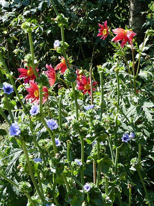 jardin des `MAL`AKHIM  - Page 7 Lysiane:visite_du_jardin:2016:p1230079
