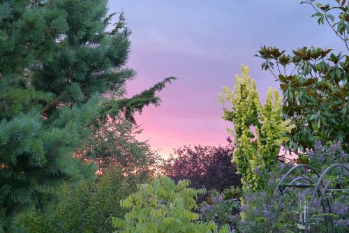 jardin des `MAL`AKHIM  - Page 7 Lysiane:visite_du_jardin:2016:p1230239
