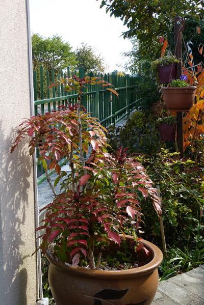 jardin des `MAL`AKHIM  - Page 7 Lysiane:visite_du_jardin:2016:p1230909