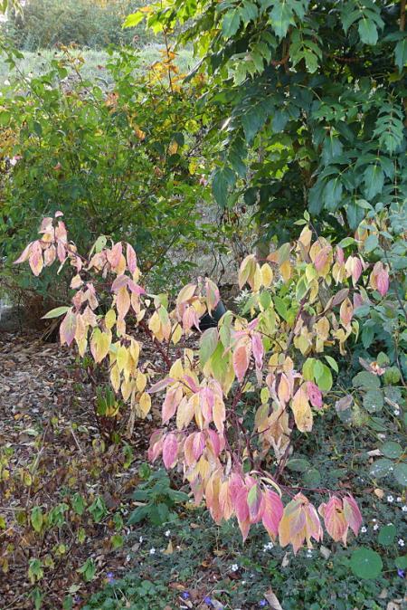 jardin des `MAL`AKHIM  - Page 7 Lysiane:visite_du_jardin:2016:p1230922