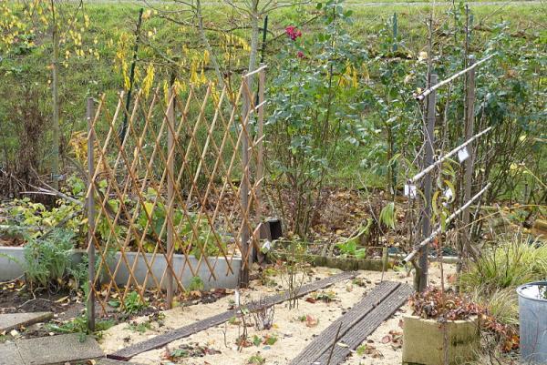 jardin des `MAL`AKHIM  - Page 7 Lysiane:visite_du_jardin:2016:p1240063