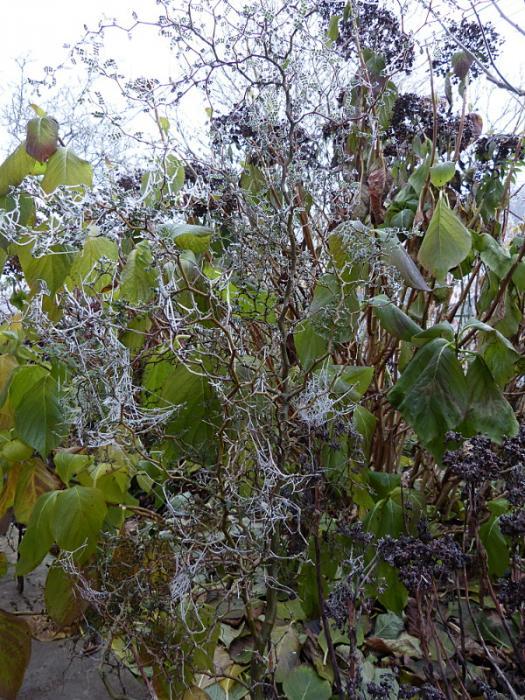 jardin des `MAL`AKHIM  - Page 7 Lysiane:visite_du_jardin:2016:p1240105