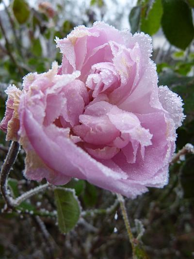 jardin des `MAL`AKHIM  - Page 7 Lysiane:visite_du_jardin:2016:p1240107