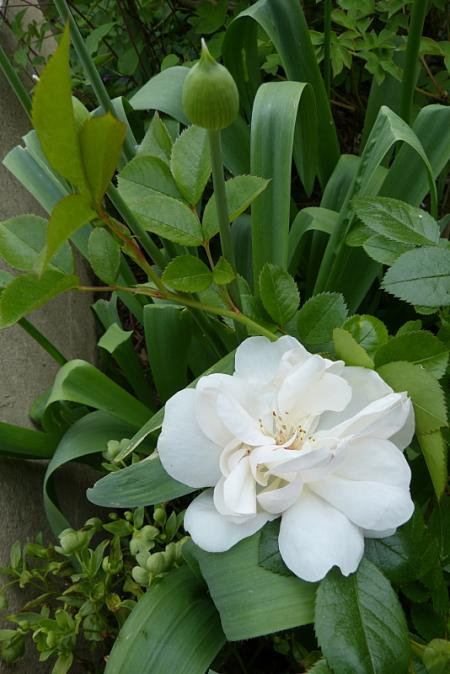 jardin des `MAL`AKHIM  - Page 7 Lysiane:visite_du_jardin:2017:p1240627