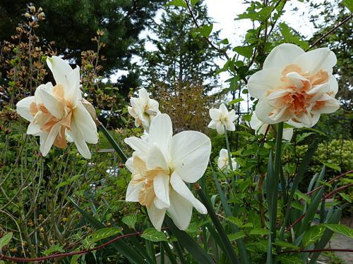 jardin des `MAL`AKHIM  - Page 7 Lysiane:visite_du_jardin:2017:p1240665